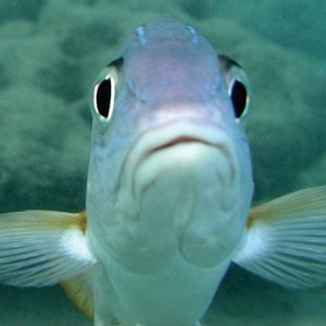 Image gallery live fish for Live fish store