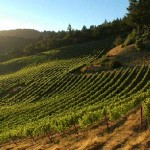 Easy-to-Find Santa Cruz Mountain Wineries