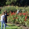 Municipal Rose Garden: The Best