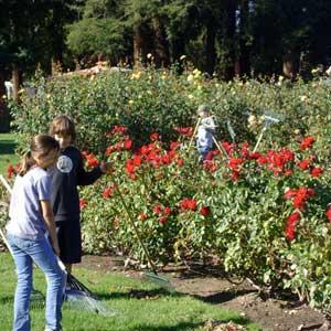 Municipal Rose Garden: The Best