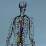 Google has released the Body Browser, a program that lets users explore the innermost workings of the human body.