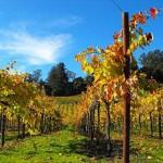 Wine Weekend in Santa Cruz