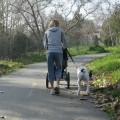 A new ordinance will be enforced regarding how long a dog's leash can be.