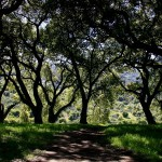 Coalition Trying to Save State's Parks, Farmland