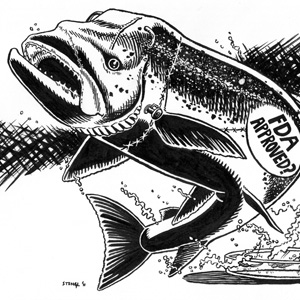 Genetically Engineered Fish Coming to California?