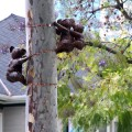 The koalas are the latest in the SJDA's beautification efforts.