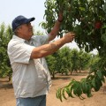 Andy, of Andy's Orchard