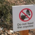 Feeding Coyotes is illegal and can endanger your community.