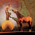 Forty-Seven horses will travel to San Jose for Cavalia.