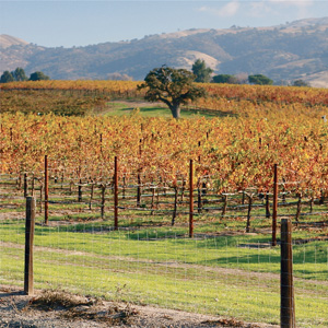 Livermore Valley Harvest Wine Celebration