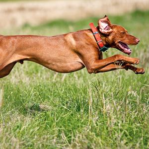 SB 1221 bans Hound Hunting