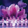IN FULL BLOOM: 'Yulan,' a work that incorporates acrobatics and classical ballet, takes its inspiration from the magnolia flower.
