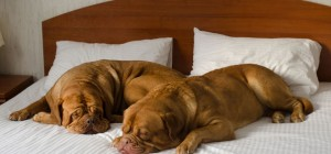 pet-friendly-hotels.007