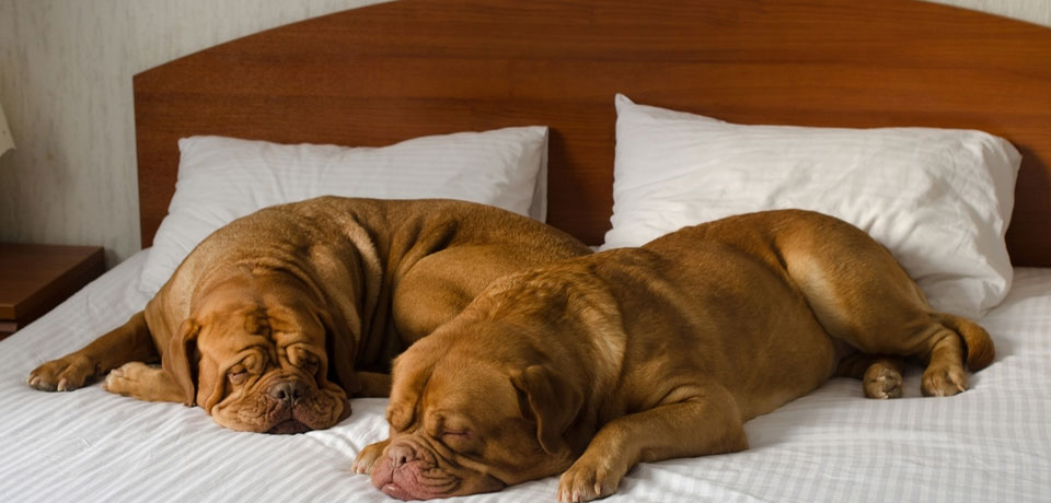 Pet Friendly Hotels in Silicon Valley