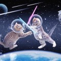 CatsinSpace.Photo