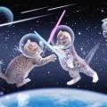 CatsinSpace.Photo