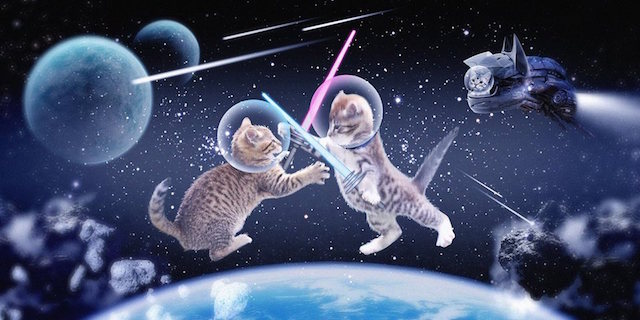 San Jose's St. James Park to Host 'Cats in Space' Make-a-Wish Event
