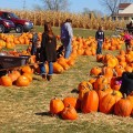The highlight of the event will be a giant pumpkin patch.