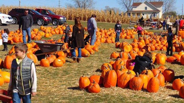 Celebrate Fall with Pumpkins in the Park