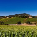 Napa Valley faces concerns of unsustainable growth in its agriculture industry.