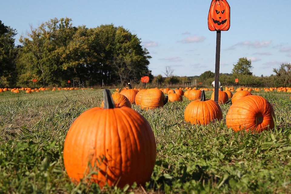 The Great Bay Area Pumpkin Patch List