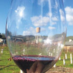 FRUIT FORWARD: The malbec is the standout red on the tasting menu at Gilroy's Calerrain Wines. Photo by Anne Gelhaus