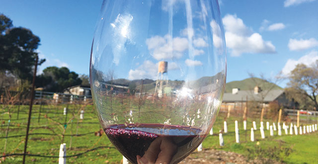 Calerrain Wines: A Rising Star on the Gilroy Scene